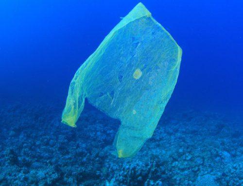 Jovem reúne R$ 4,5 milhões para retirar plásticos dos mares do planeta